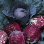 Cabbage Red Drumhead - Appx 1000 seeds